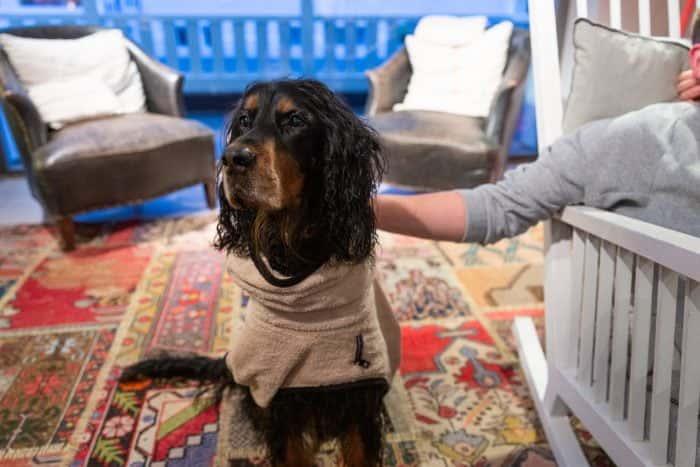 Der Agenturhund von Me & Company mit Hundejacke